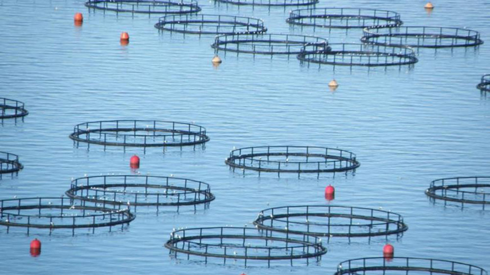 Fish Farm Merger between Mubadala and AMERRA - Andromeda Group